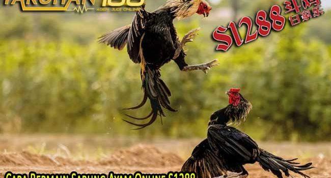 Cara Bermain Sabung Ayam Online S1288